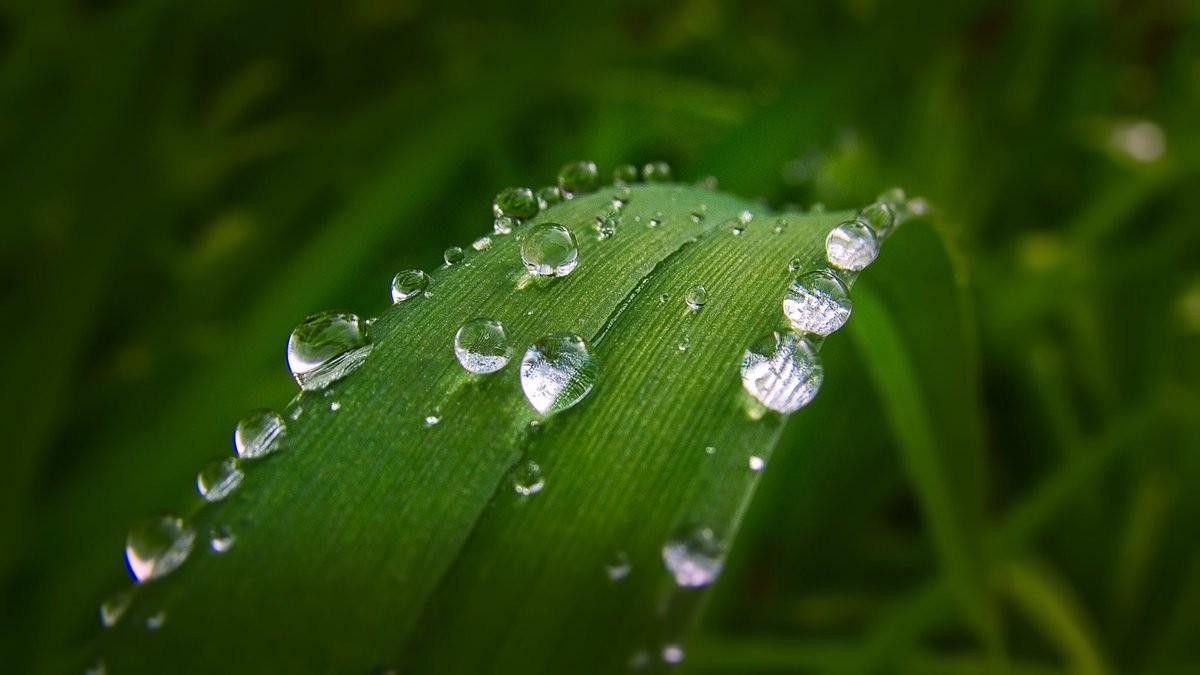 Bitki Gelişim Düzenleyici